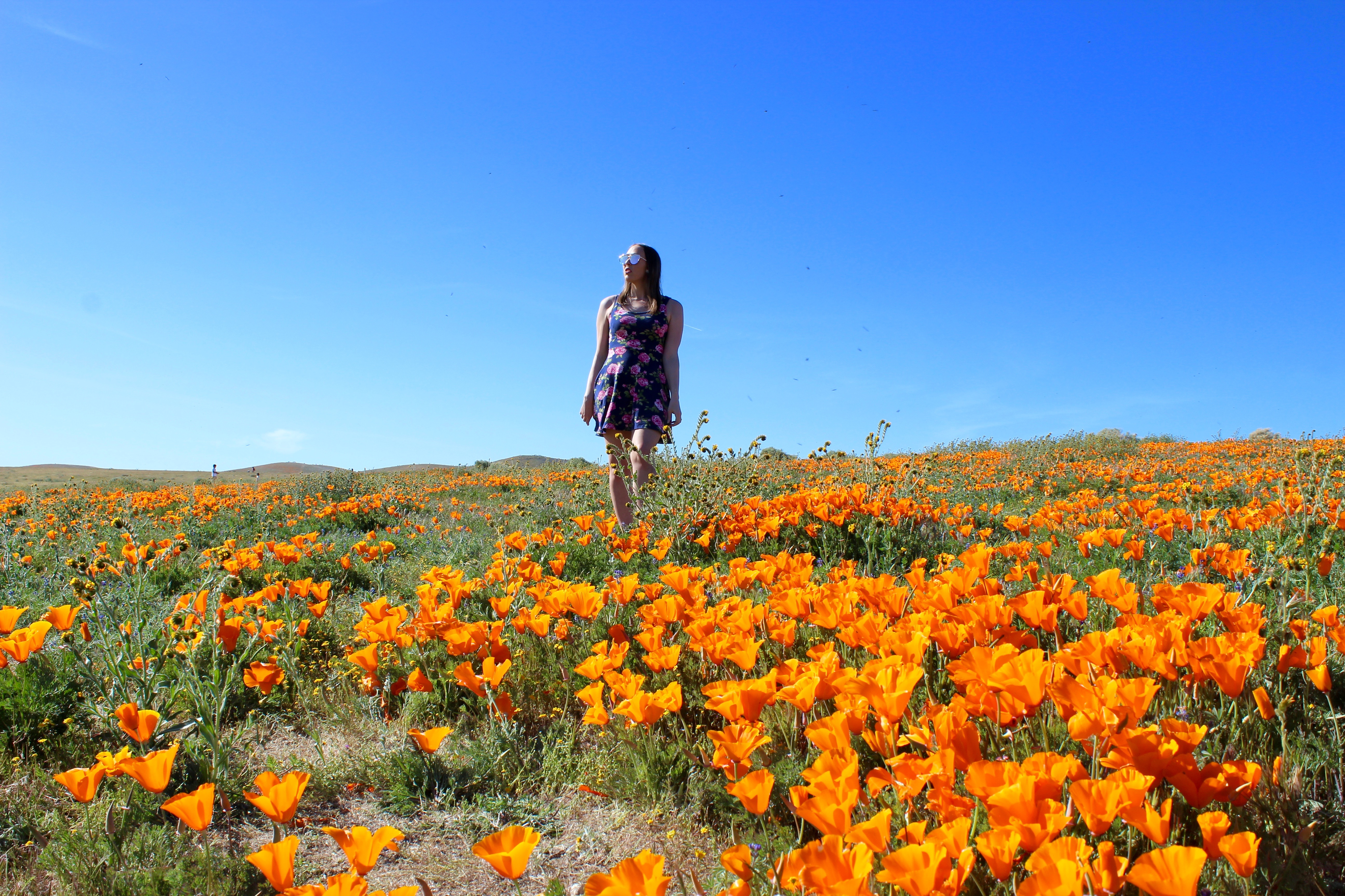 Where To See The Super Bloom In California