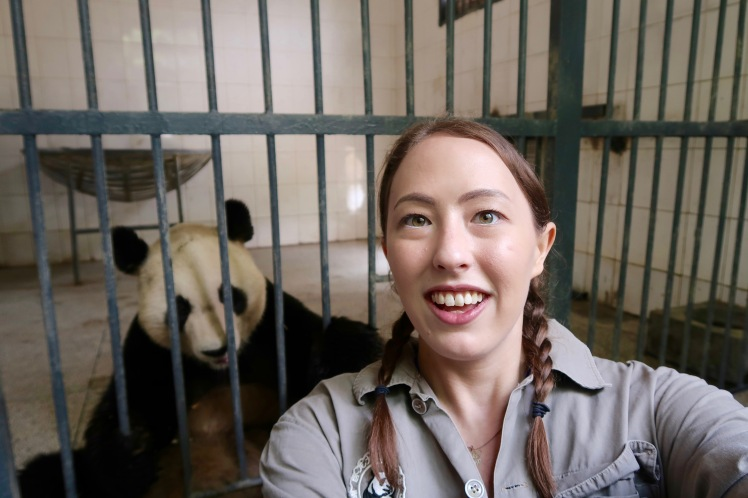 volunteering with pandas in china
